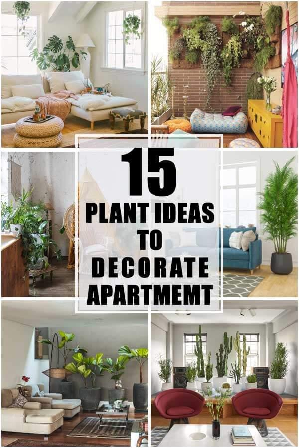 15 Plant Ideas To Decorate Apartment