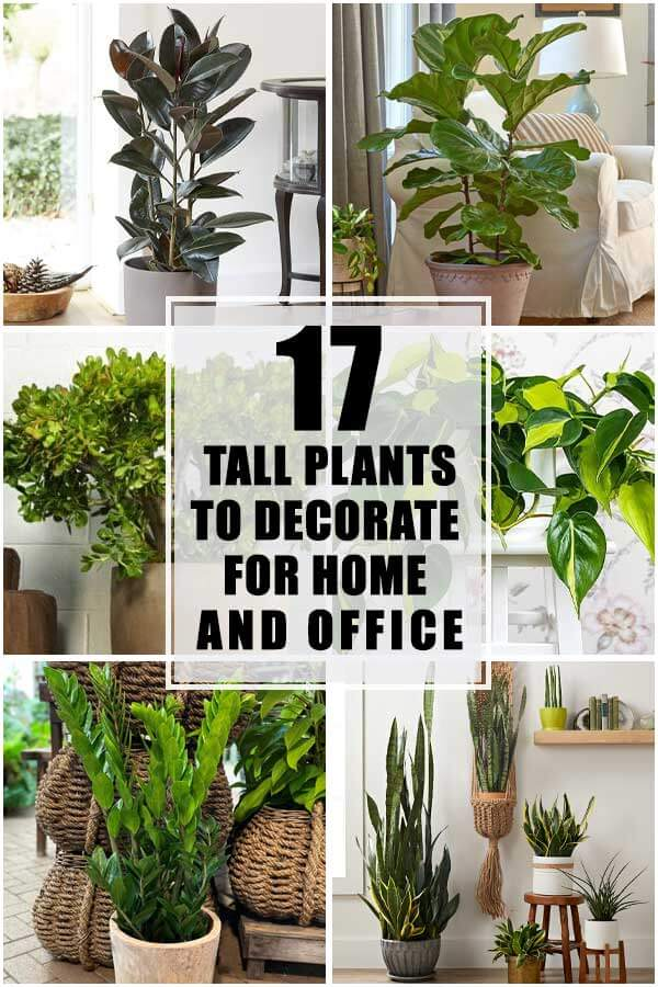 17 Tall Houseplants To Decorate For Home And Offices