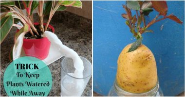 18 Clever Gardening Hacks And Tips That You Should Know