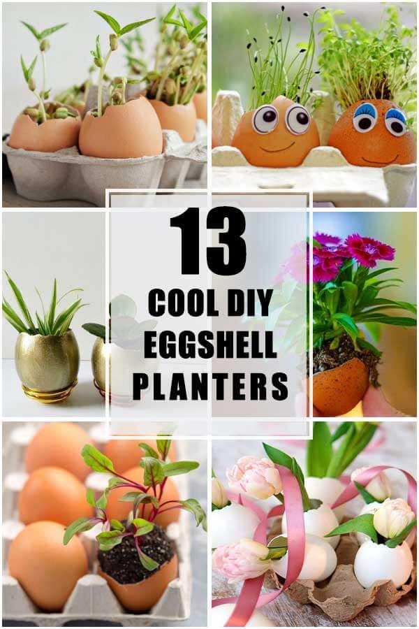 13 Cool DIY Eggshell Planters