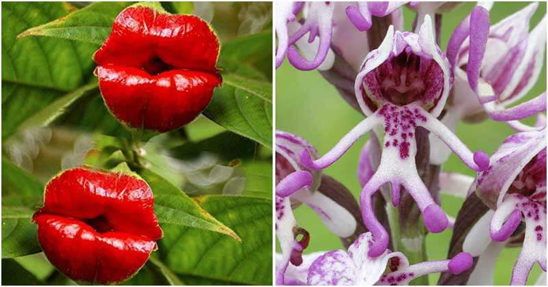 18 Unique Flowers That Look Like Something Else