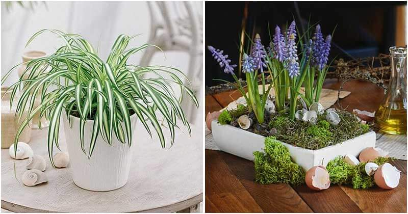 19 Indoor Plants That Are Great To Place On Coffee Table