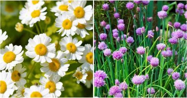 20 Plants To Attract Beneficial Insects In Your Garden