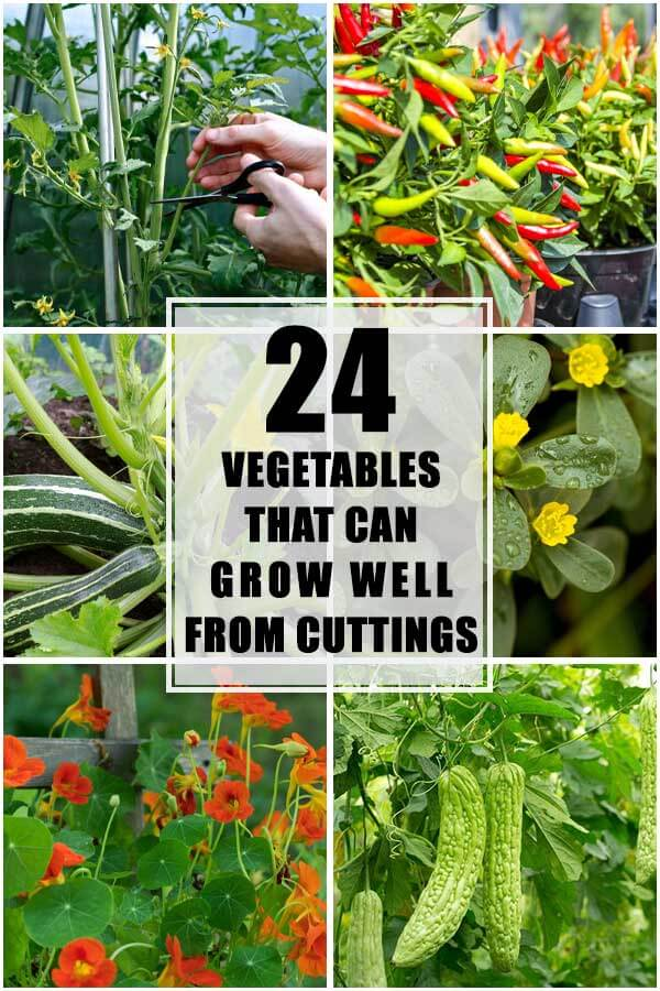 24 Vegetables That Can Grow Well From Cuttings