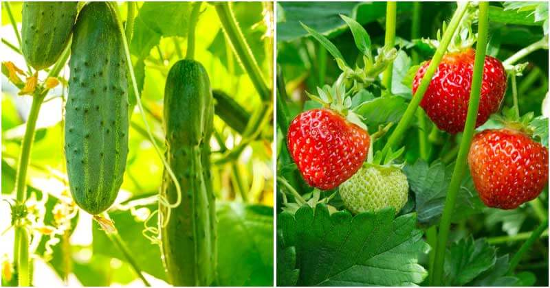 30 Easy-to-grow Fruits and Veggies For New Gardeners