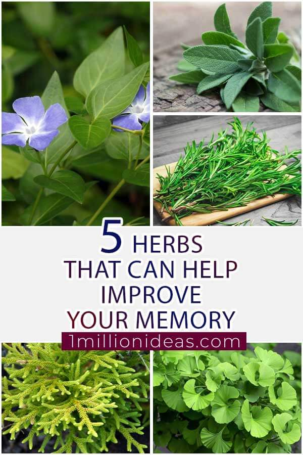 5 Herbs That Can Help Improve Your Memory