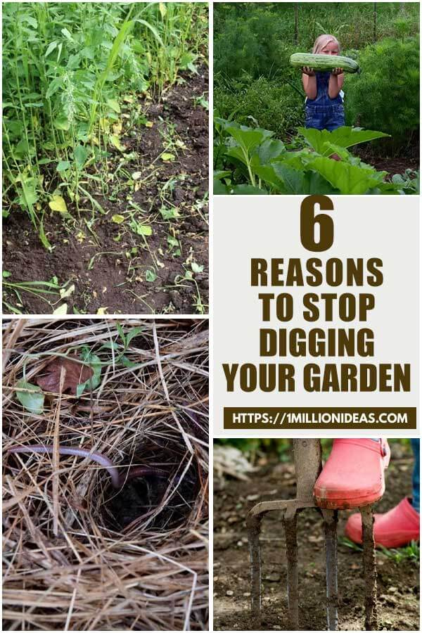 6 Reasons That You Should Stop Digging Your Garden