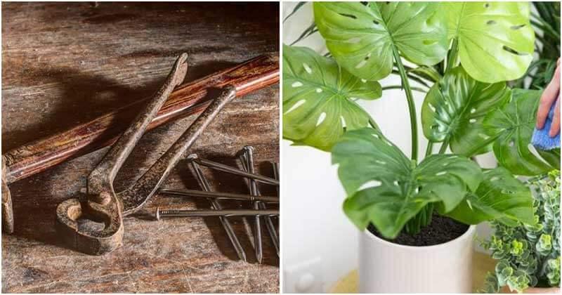 6 Vaseline Uses For Gardeners