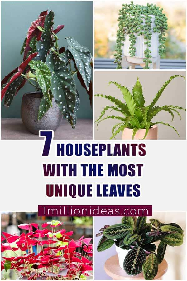 7 Houseplants With The Most Unique Leaves That You Never Seen