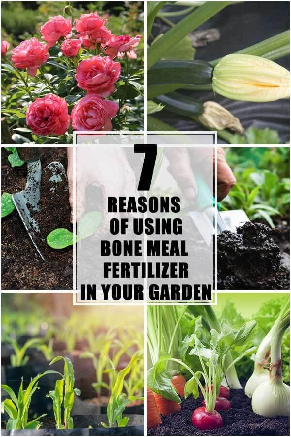 7 Reasons Of Using Bone Meal Fertilizer In Your Garden