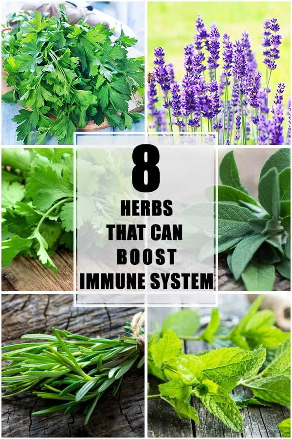 8 Herbs That Can Boost Your Immune System