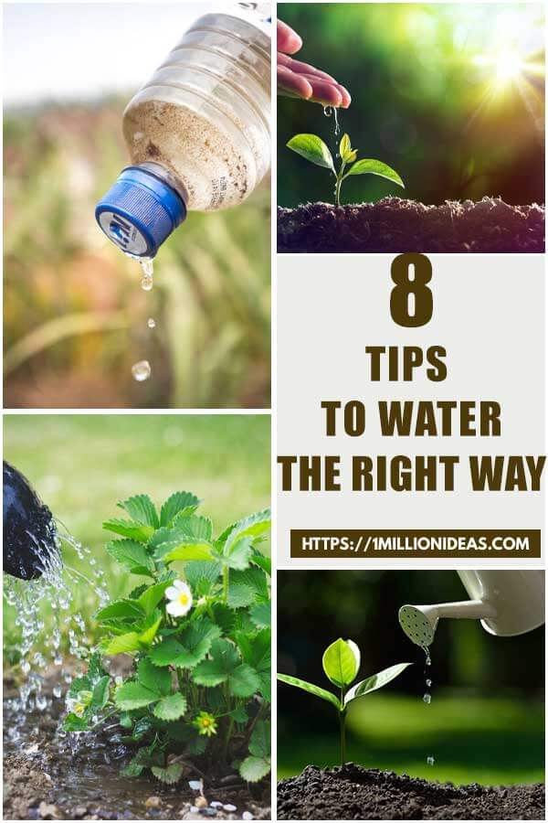 8 Tips To Water The Right Way For Your Vegetable Garden