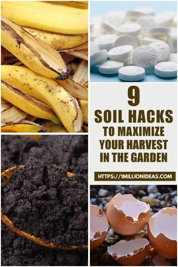 9 Soil Hacks To Maximize Your Harvest In The Garden