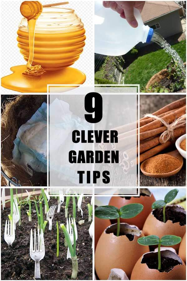 Collection of 9 Most Clever Gardening Tips