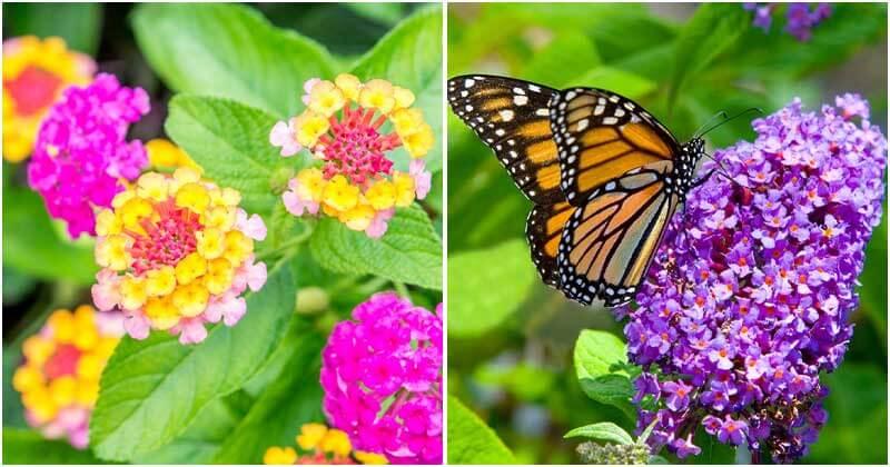 Top 15 Drought-Tolerant Flowers
