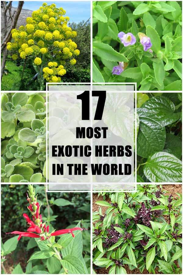 Top 17 Most Exotic Herbs In the World