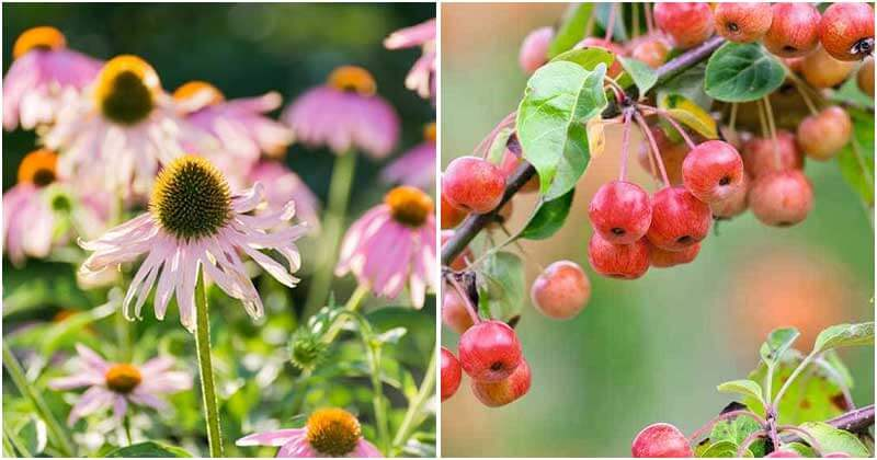 10 Plants That Will Attract Birds In Your Garden