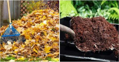 10 Ways To Build Better Soil For Winter