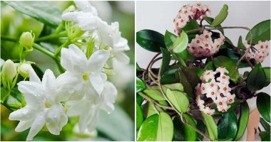 14 Best Indoor Plants To Make A Restful Sleep