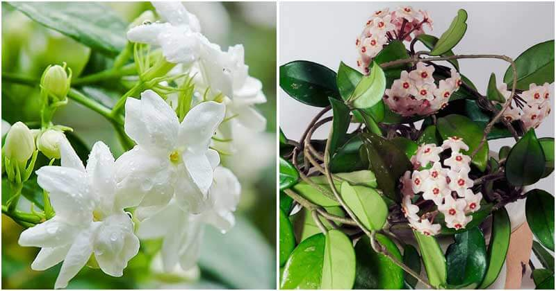 14 Best Indoor Plants To Make A Restful Sleep