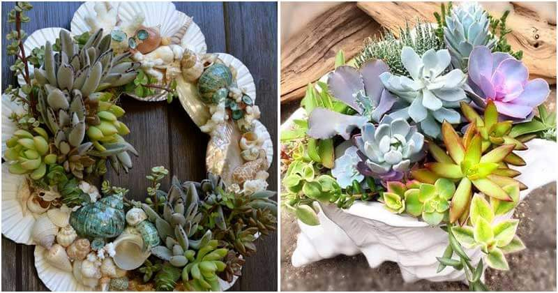 17 DIY Seashell Planter Ideas