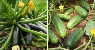 18 Vegetables Can Grow Well In Sandy Soil