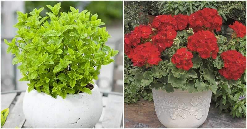19 Plants That Can Keep Spiders Away