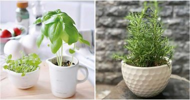 20 Seeds To Sow Easily In Cups