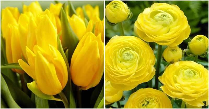 25 Best Beautiful Yellow Flowers In The Garden