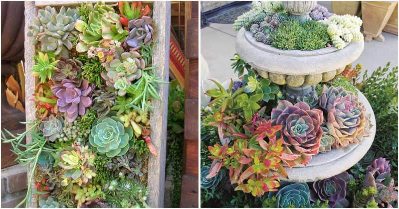 27 Delightful Succulent Garden Ideas For Your Backyard