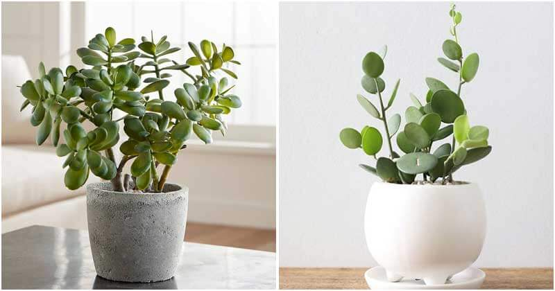 30 Indoor Plants That Can Grow From Cuttings