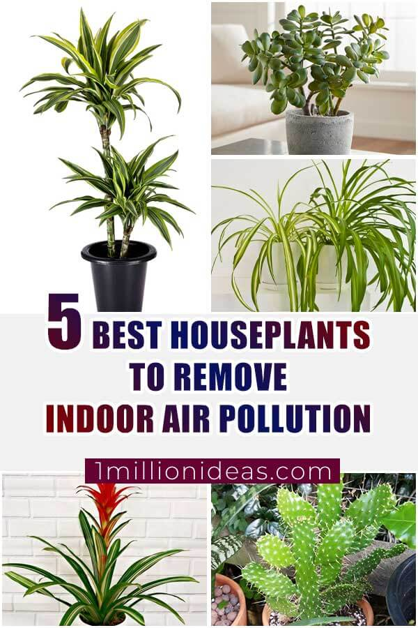 5 Best Houseplants To Remove Indoor Air Pollution