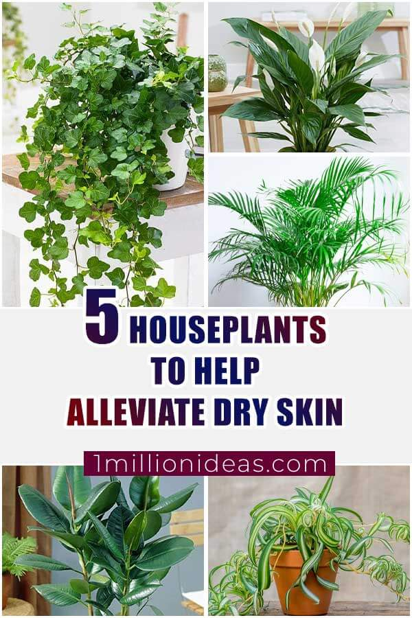 5 Indoor Plants To Help Alleviate Dry Skin