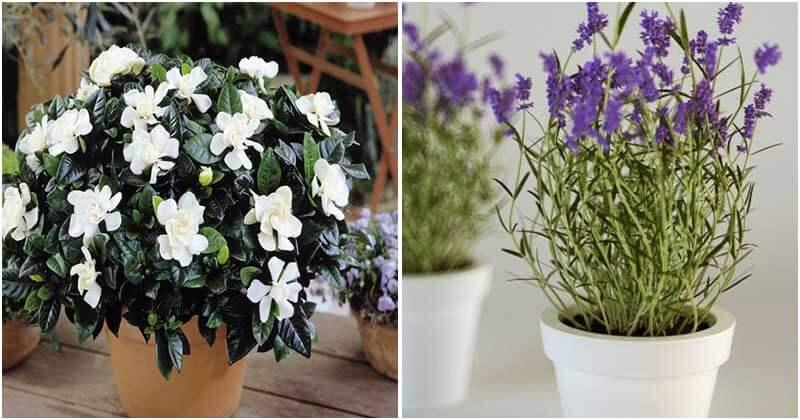 6 Best Fragrant Indoor Plants
