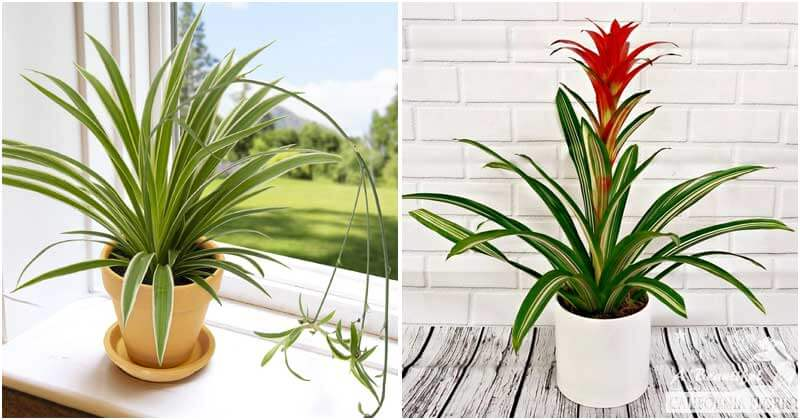 6 Indoor Plants That Can Boost Your Well-Being