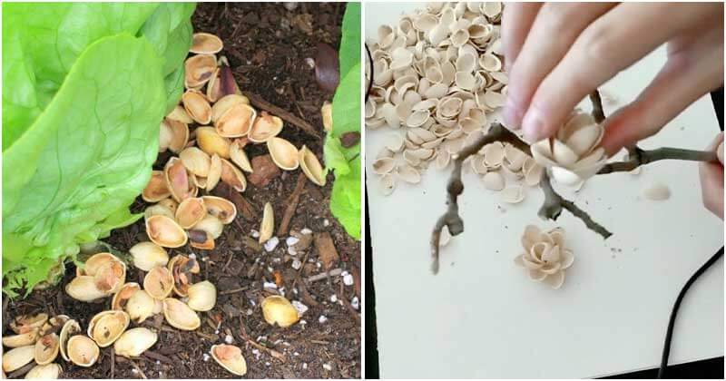 7 Amazing Uses of Pistachio Shells for Your Home and Garden