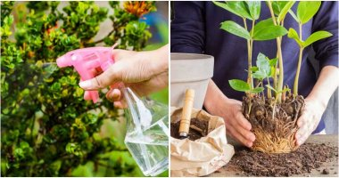 7 Things To Do For Your Garden In The Evening