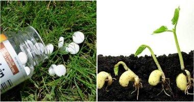 7 Uses Of Aspirin For Your Garden