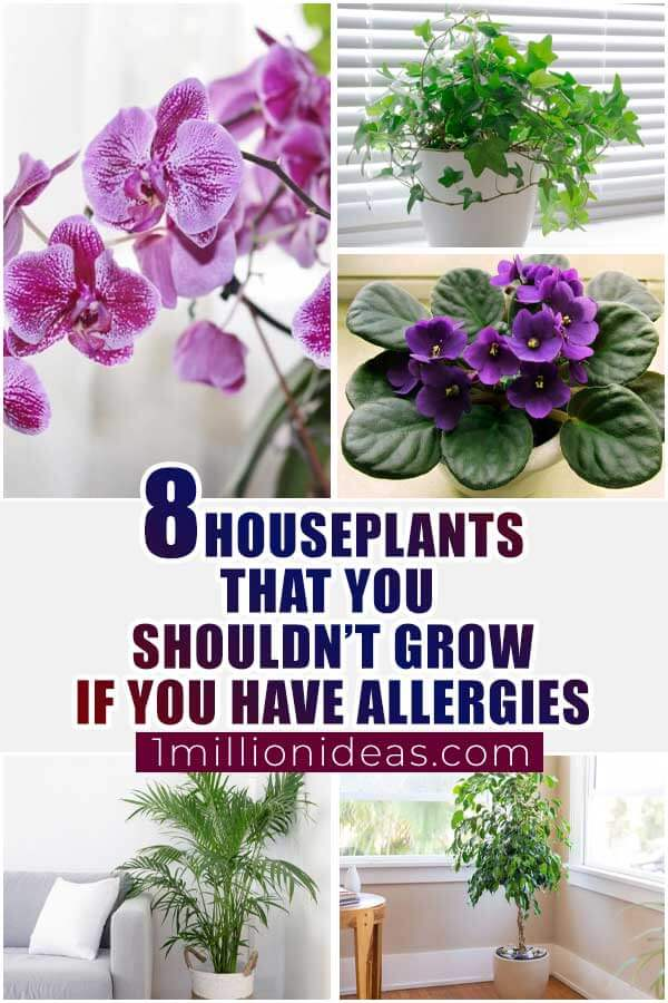 8 Houseplants That You Shouldn't Grow If You Have Allergies