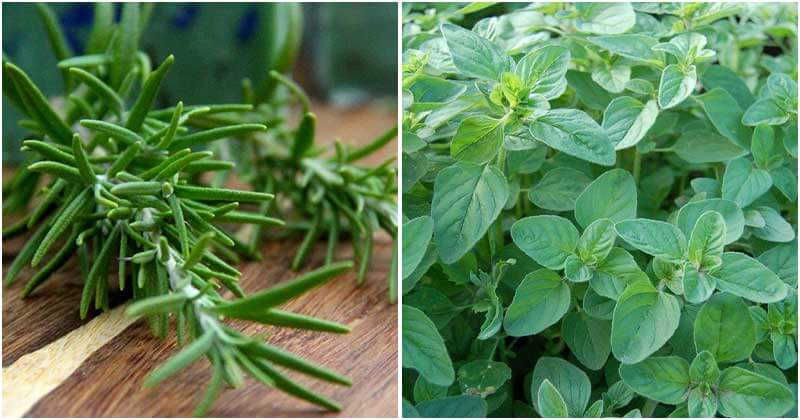 9 Companion Herbs To Repel Insects For The Vegetable Garden