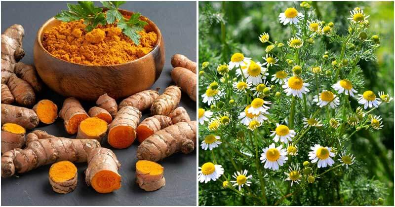 10 Medicinal Plants To Grow In Your Garden