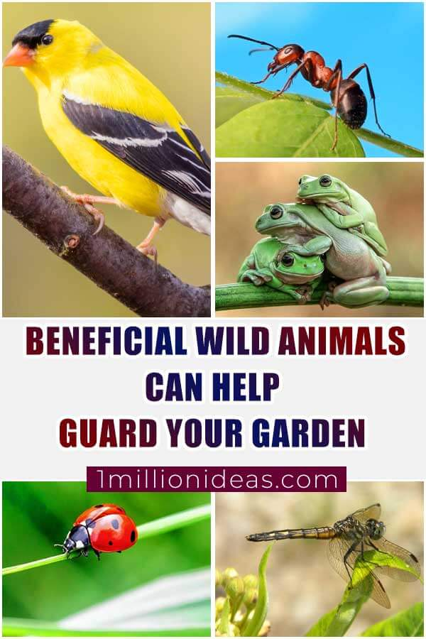 Beneficial Wild Animals That Can Help Guard Your Garden