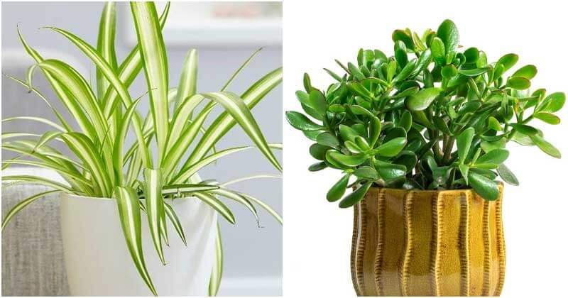 7 Indoor Plants Can Beat The Winter Blues