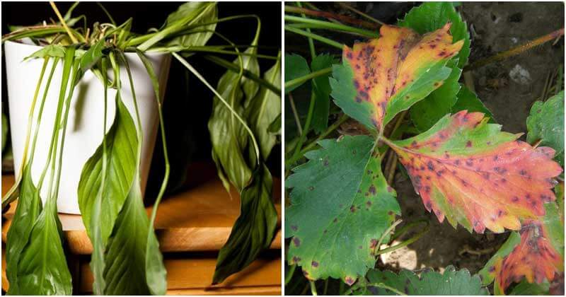 Signs To Recognize Unhappy Houseplants
