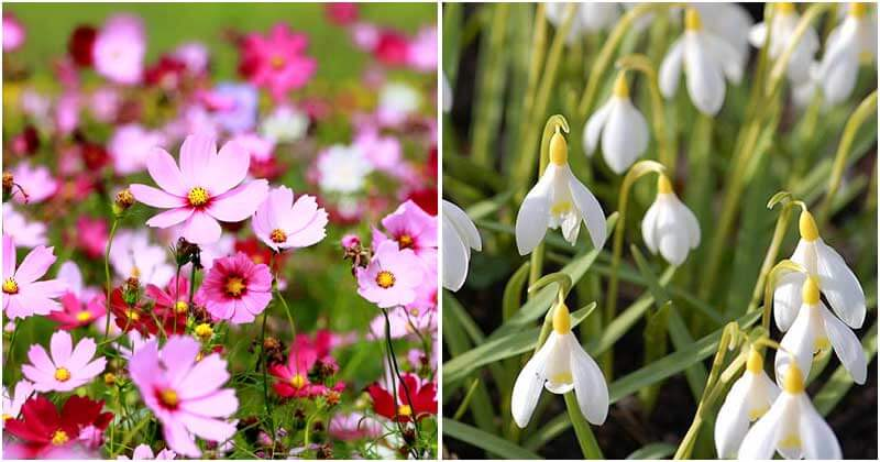 20 Low-Maintenance Flowers That You Can Grow For Any Garden
