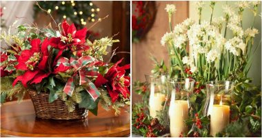 10 Best Beautiful Christmas Plants and Flowers