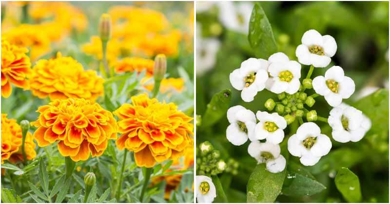 10 Annual Flowers For Winter