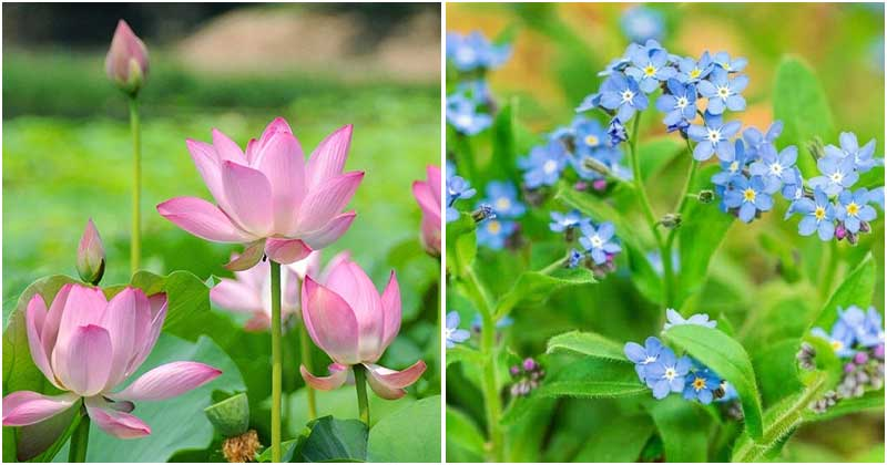 15 Beautiful Water Plants For Indoors and Backyard Ponds