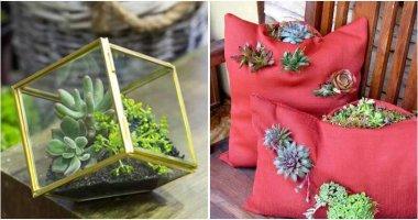 30 Ideas Plant Your Favorite Succulents