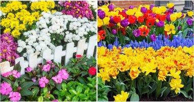 20 Colorful Garden Ideas